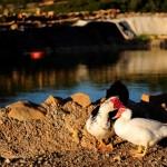 Patos Aldea Ecorural