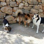 admisión mascotas